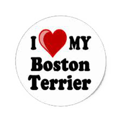 Boston Terrier Stickers messages sticker-4