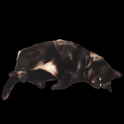 Cat's messages sticker-4