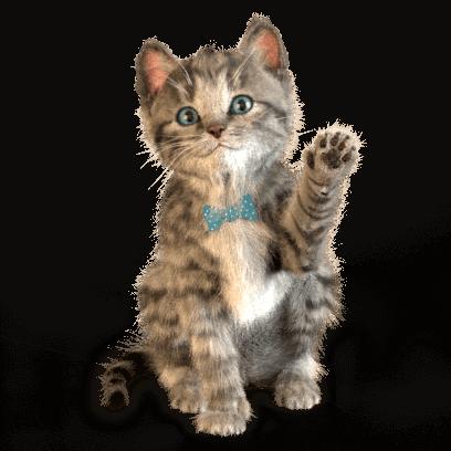 Little Kitten Stickers messages sticker-10