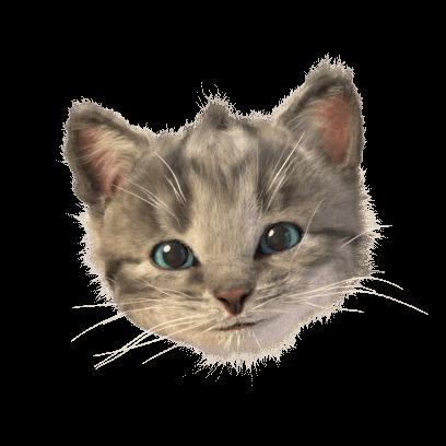Little Kitten Stickers messages sticker-0
