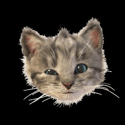 Little Kitten Stickers messages sticker-7