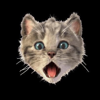 Little Kitten Stickers messages sticker-1