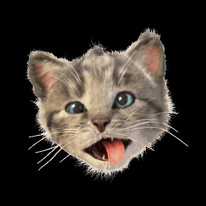 Little Kitten Stickers messages sticker-9