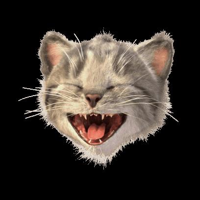 Little Kitten Stickers messages sticker-5