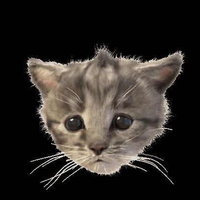 Little Kitten Stickers messages sticker-2