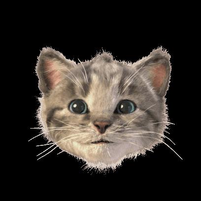 Little Kitten Stickers messages sticker-4