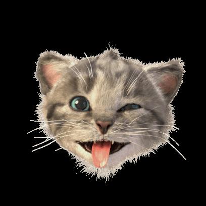 Little Kitten Stickers messages sticker-8