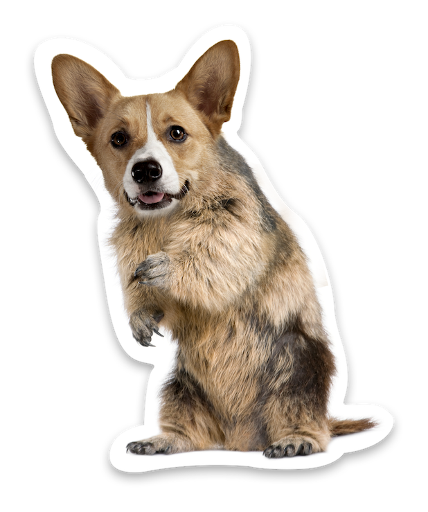 Animal Mashup Stickers messages sticker-0