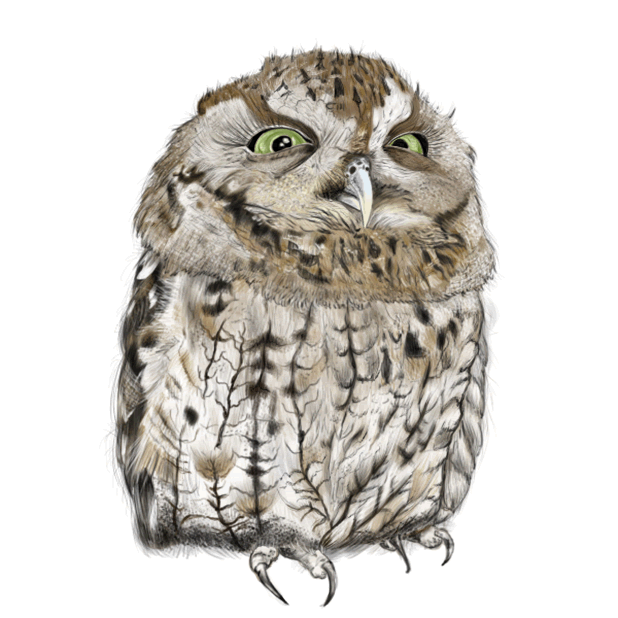 Owl - Daily Moods messages sticker-5