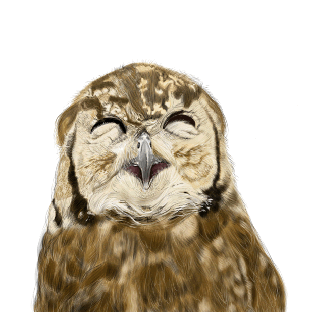 Owl - Daily Moods messages sticker-6