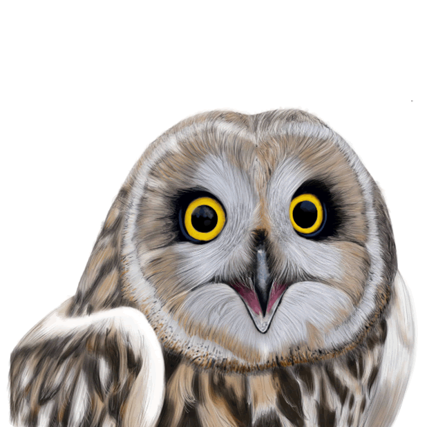 Owl - Daily Moods messages sticker-7