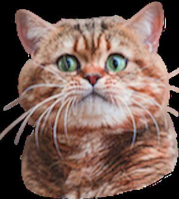 Fresh Cats messages sticker-8