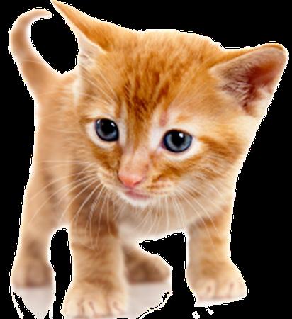 Fresh Cats messages sticker-11