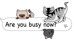 Cat Cat Cat English Version Stickers Pack messages sticker-4