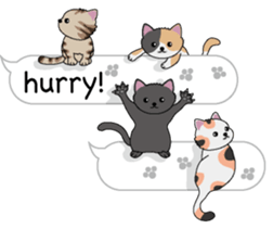 Cat Cat Cat English Version Stickers Pack messages sticker-10