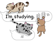 Cat Cat Cat English Version Stickers Pack messages sticker-8