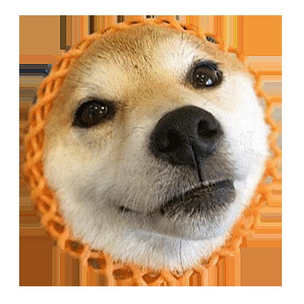 Shiba Dog's Head messages sticker-3