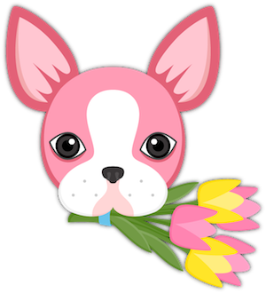 Valentine's Day Boston Terrier messages sticker-2