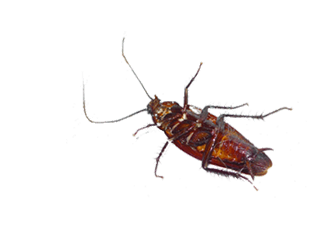 Animated Insects messages sticker-7