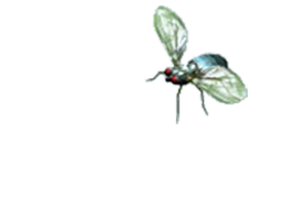 Animated Insects Sticker App messages sticker-9