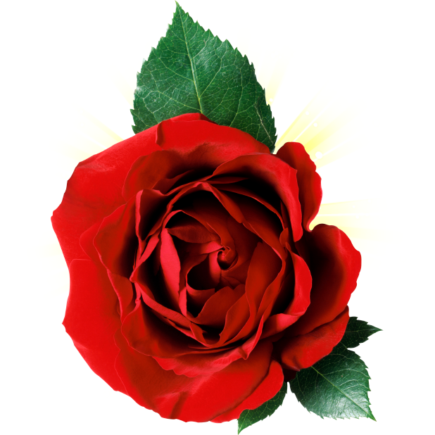 Romantic Rose Stickers messages sticker-3