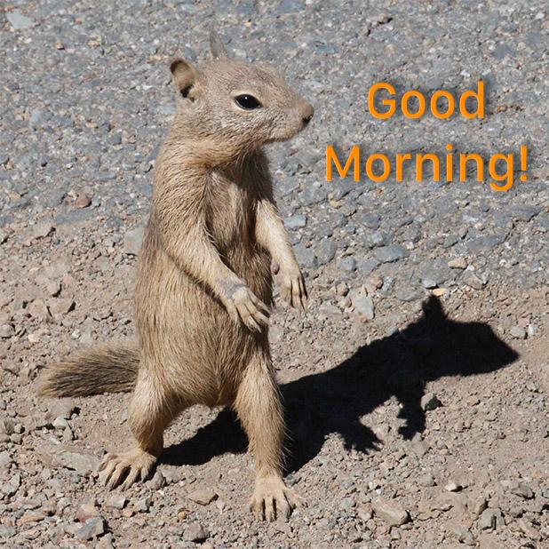 Good Morning-! messages sticker-0
