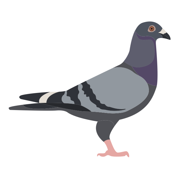 Trash Birds - Funny Realistic Pigeons messages sticker-1
