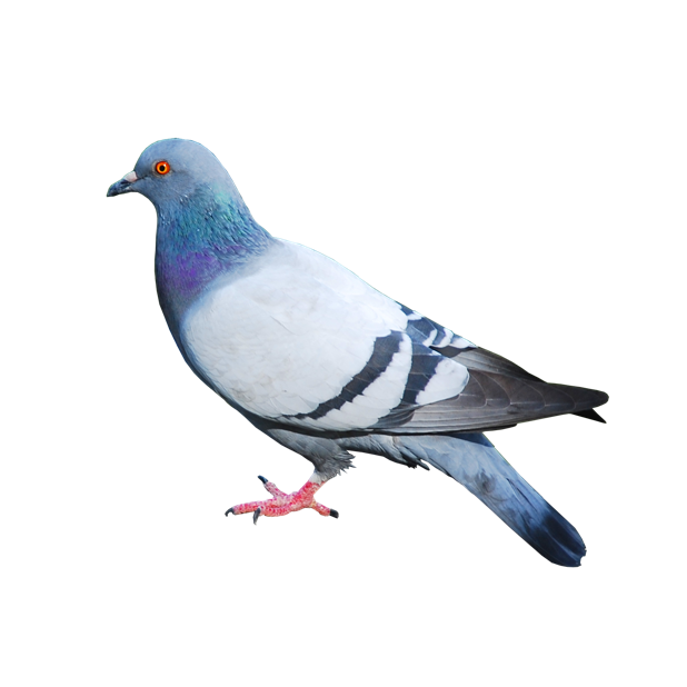 Trash Birds - Funny Realistic Pigeons messages sticker-7
