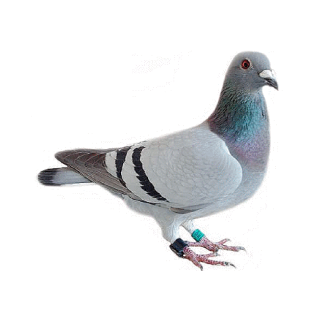 Trash Birds - Funny Realistic Pigeons messages sticker-8