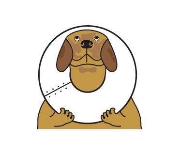 Golden Retriever Stickers for iMessage  Daily Use messages sticker-10