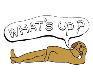 Golden Retriever Stickers for iMessage  Daily Use messages sticker-4