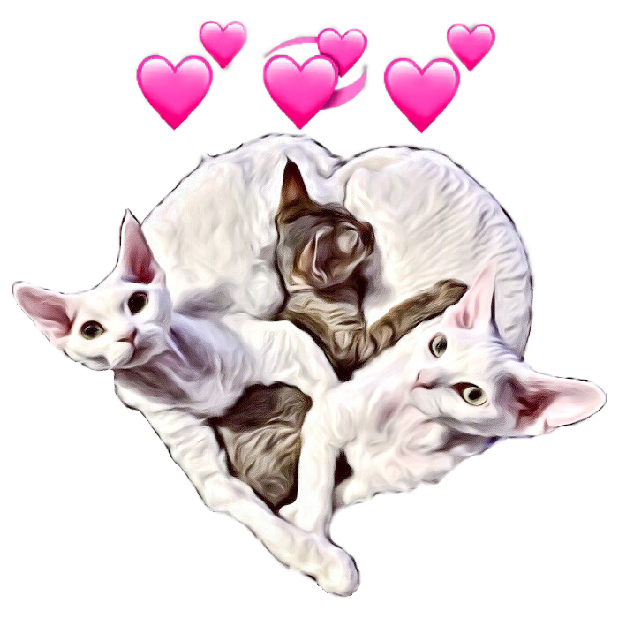 Devon Rex messages sticker-0
