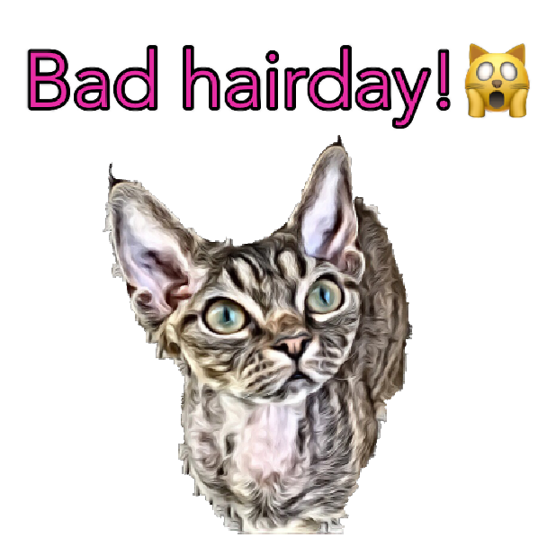 Devon Rex messages sticker-3