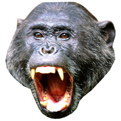Monkey Head messages sticker-1