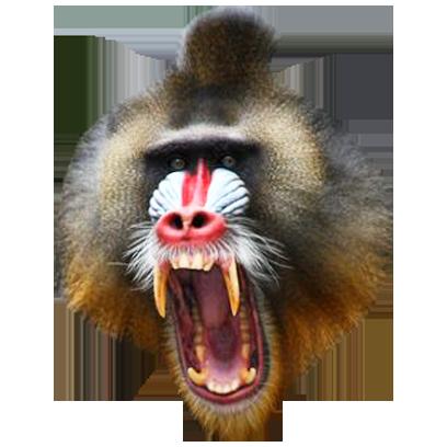 Monkey Head messages sticker-3