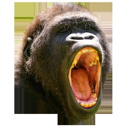 Monkey Head messages sticker-6