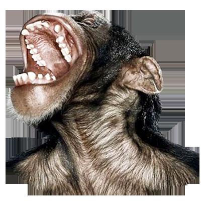 Monkey Head messages sticker-0