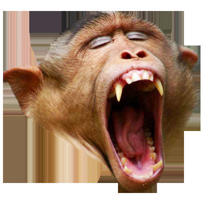Monkey Head messages sticker-9