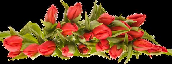 День победы - Советские открытки и цветы на 9 мая messages sticker-1