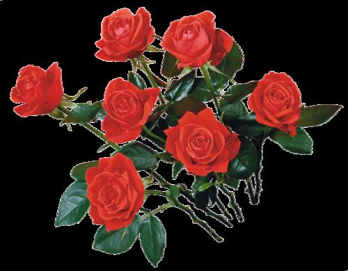День победы - Советские открытки и цветы на 9 мая messages sticker-10