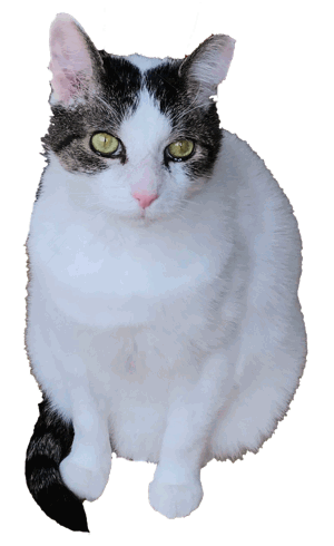 Your Cat Snowball messages sticker-2