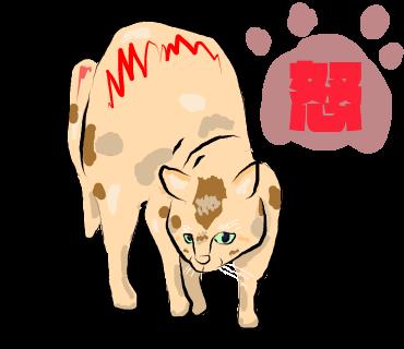 有点怪猫 messages sticker-7