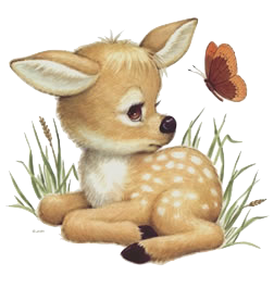 DeerCute - Deer Stickers And Emoji Pack messages sticker-2