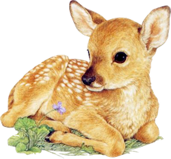 DeerCute - Deer Stickers And Emoji Pack messages sticker-1