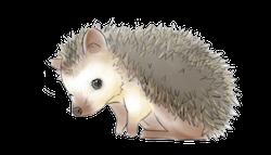 Porcupine Stickers messages sticker-11
