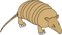 Armadillos Stickers messages sticker-3