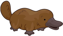 PlatypusCute - Platypus Emoji And Stickers Pack messages sticker-1