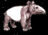 Tapirs Stickers messages sticker-0