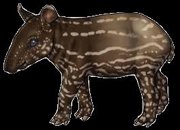 Tapirs Stickers messages sticker-4