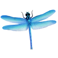 Dragonfly Stickers messages sticker-4